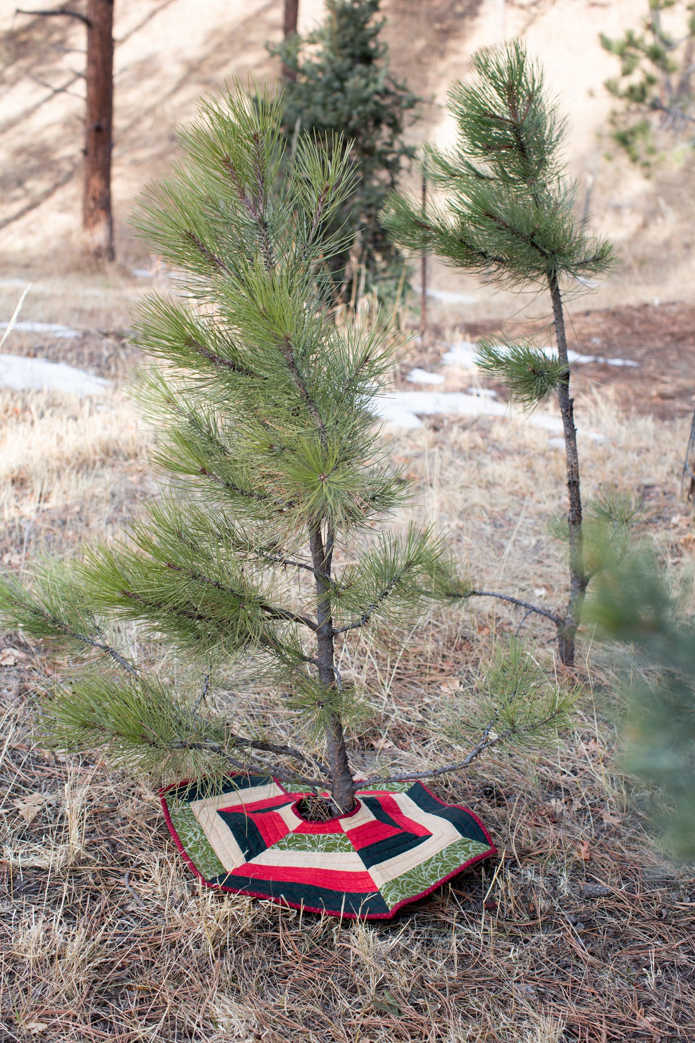 Pine tree outside with a Christmas tree Skirt at the bottom.