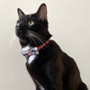Party Bow Pet Collar Kit