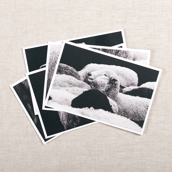 Sheep Portrait Postcard Set