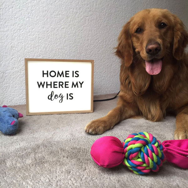 "LIGHTBOX ""HOME IS WHERE MY DOG"""