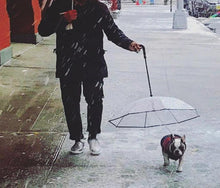 Load image into Gallery viewer, Transparent Dog Umbrella