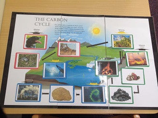 Carbon Cycle Chart and Cards