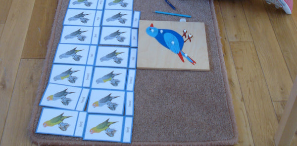 Bundle: Montessori Nomenclature 3-Part Cards for Parts Of A Fish, Amphibian, Reptile, Bird and Mammal