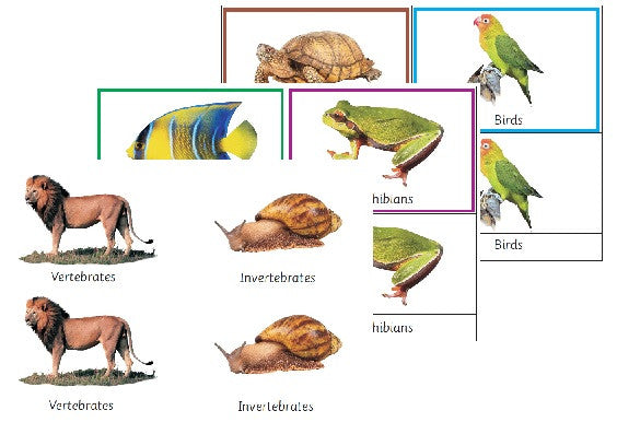 Montessori Classification Of The Animal Kingdom