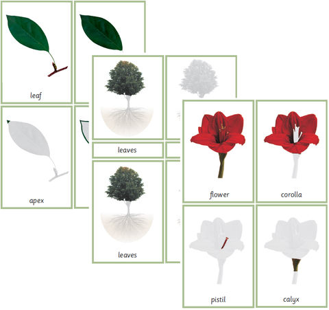 Bundle: Montessori Botany Nomenclature 3-Part Cards for Parts of the Tree, Flower and Leaf