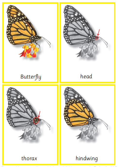 Montessori Butterfly Nomenclature 3-Part Cards