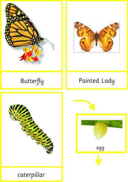 Montessori Butterfly Pack