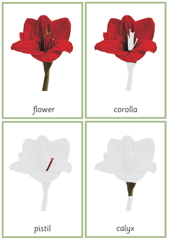 Montessori Flower Nomenclature 3-Part Cards