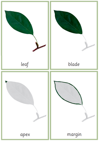 Montessori Leaf Nomenclature 3-Part Cards