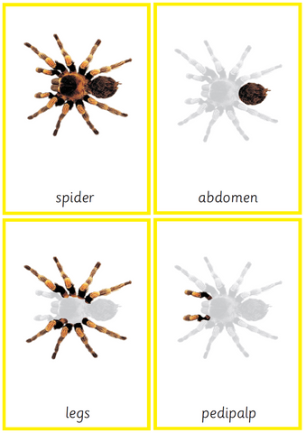 Montessori Spider Nomenclature 3-Part Cards