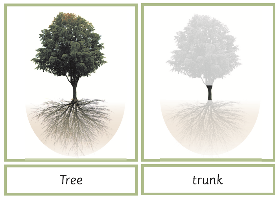 Montessori Tree Nomenclature 3-Part Cards