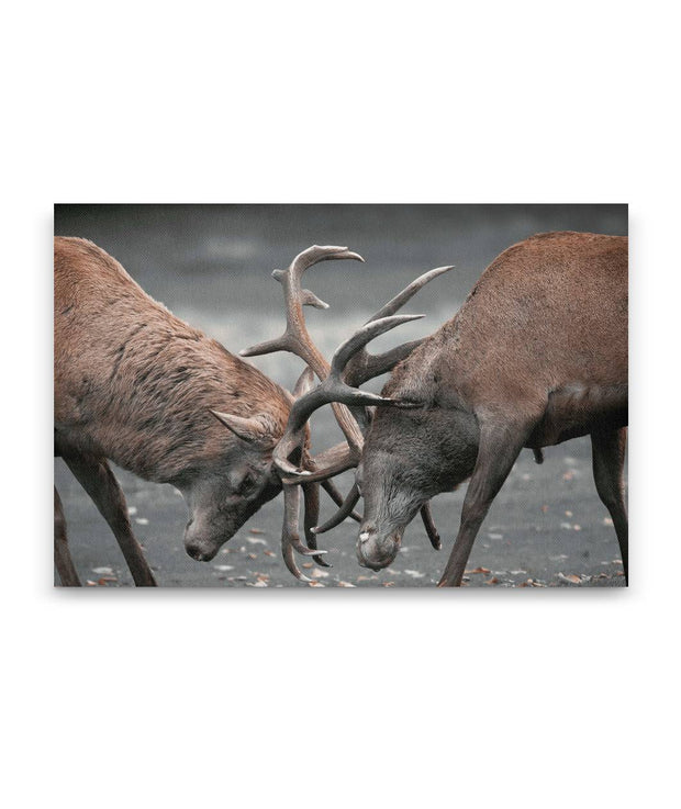 2 Deers Canvas
