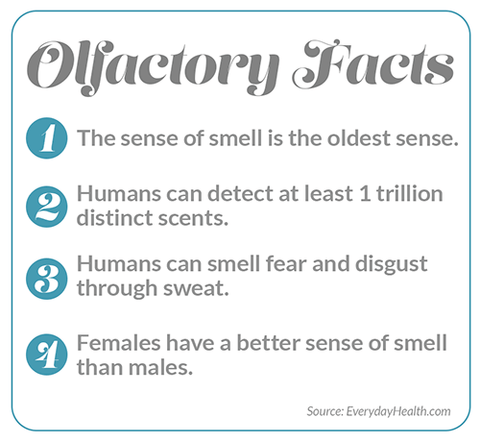 Facts about the sense of smell.