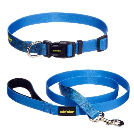 Leash & Collar