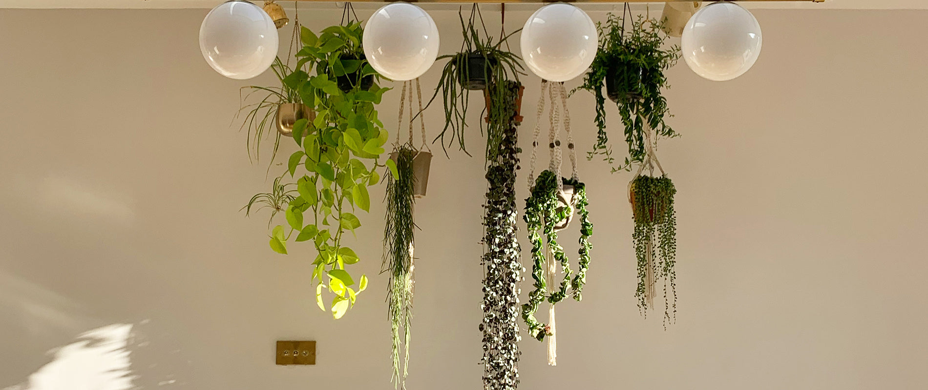 Renovating Love Lane - 5 top tips for displaying your house plants