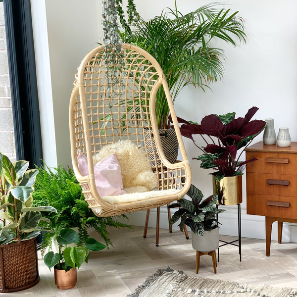 House Plants Interior Design