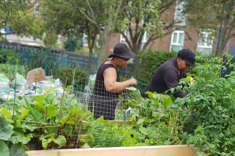 Urban Growth London initiative communities learning more about gardening