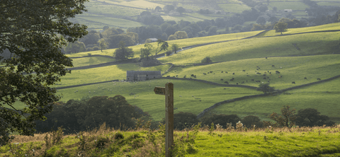 Long walks and image of the countryside with green rolling hills