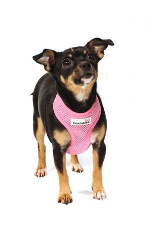 Doodlebone pink mesh harness from Millie and Mason's pet shop wakefield