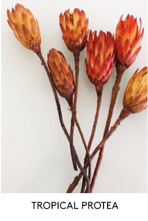 Tropical Protea Artificial Flowers