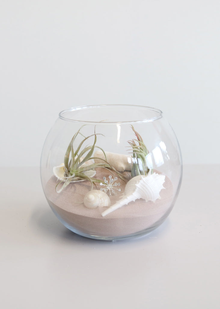 DIY Beach Terrarium