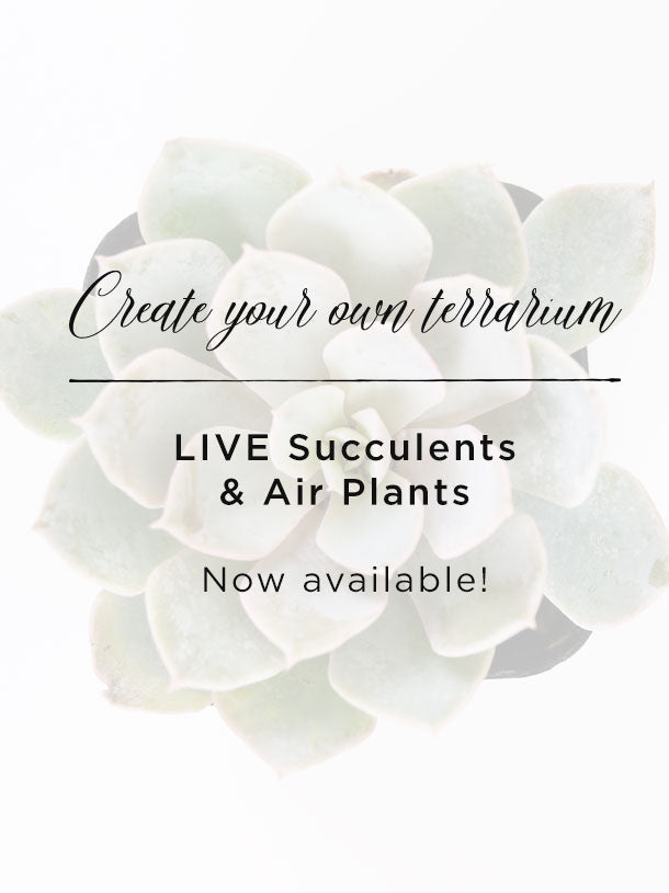 LIVE Succulents & Air Plants