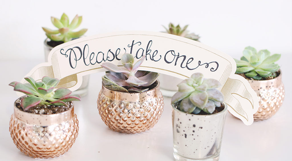 Get The Look Succulent Wedding Favors Diy Wedding Favors Diy