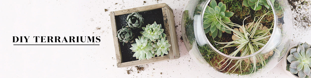 DIY Terrariums with Succulents and Cacti | Create Your Own DIY Terrarium