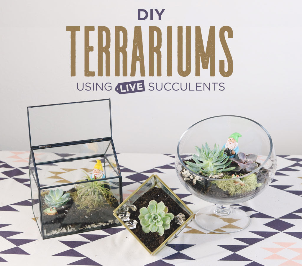 DIY Terrariums Using Live Succulents | How To Make A Terrarium ...