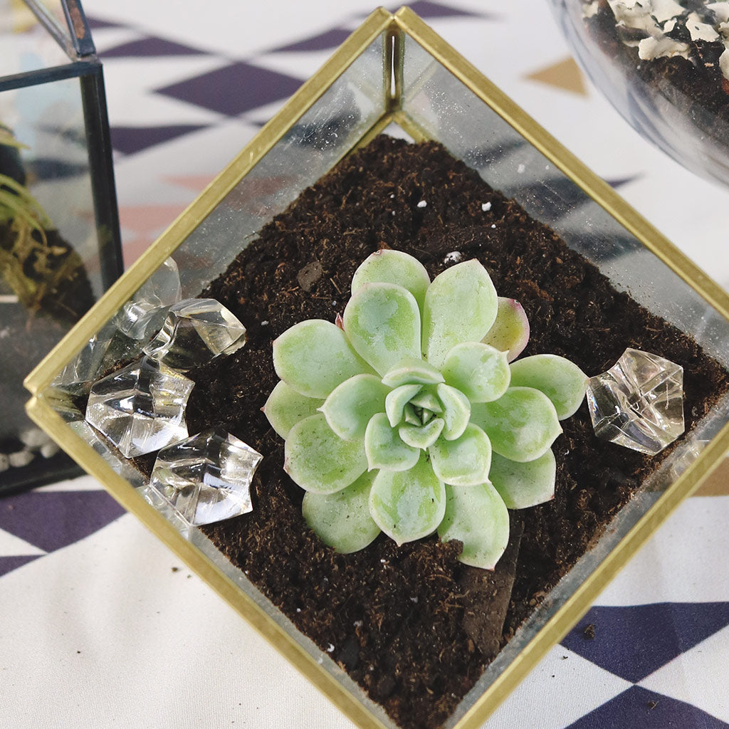 Diy Terrariums Using Live Succulents How To Make A Terrarium