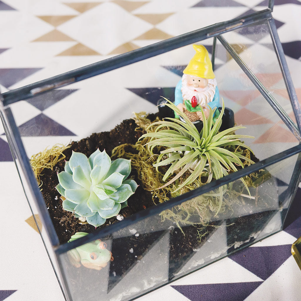DIY Terrariums Using Live Succulents