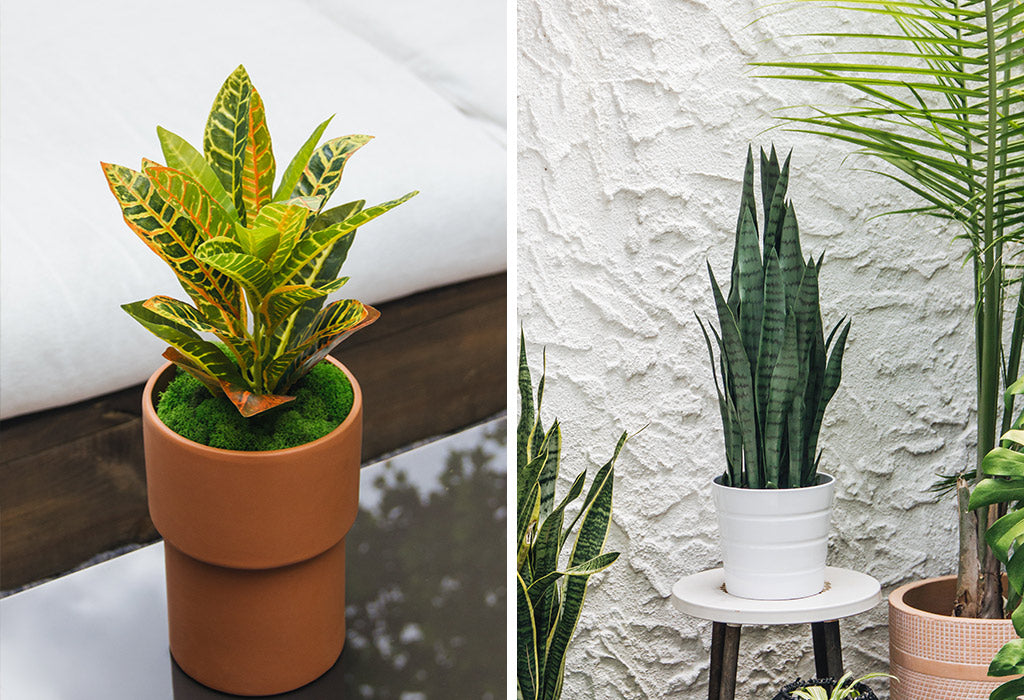 outdoor artificial snakeplant and plastic croatan