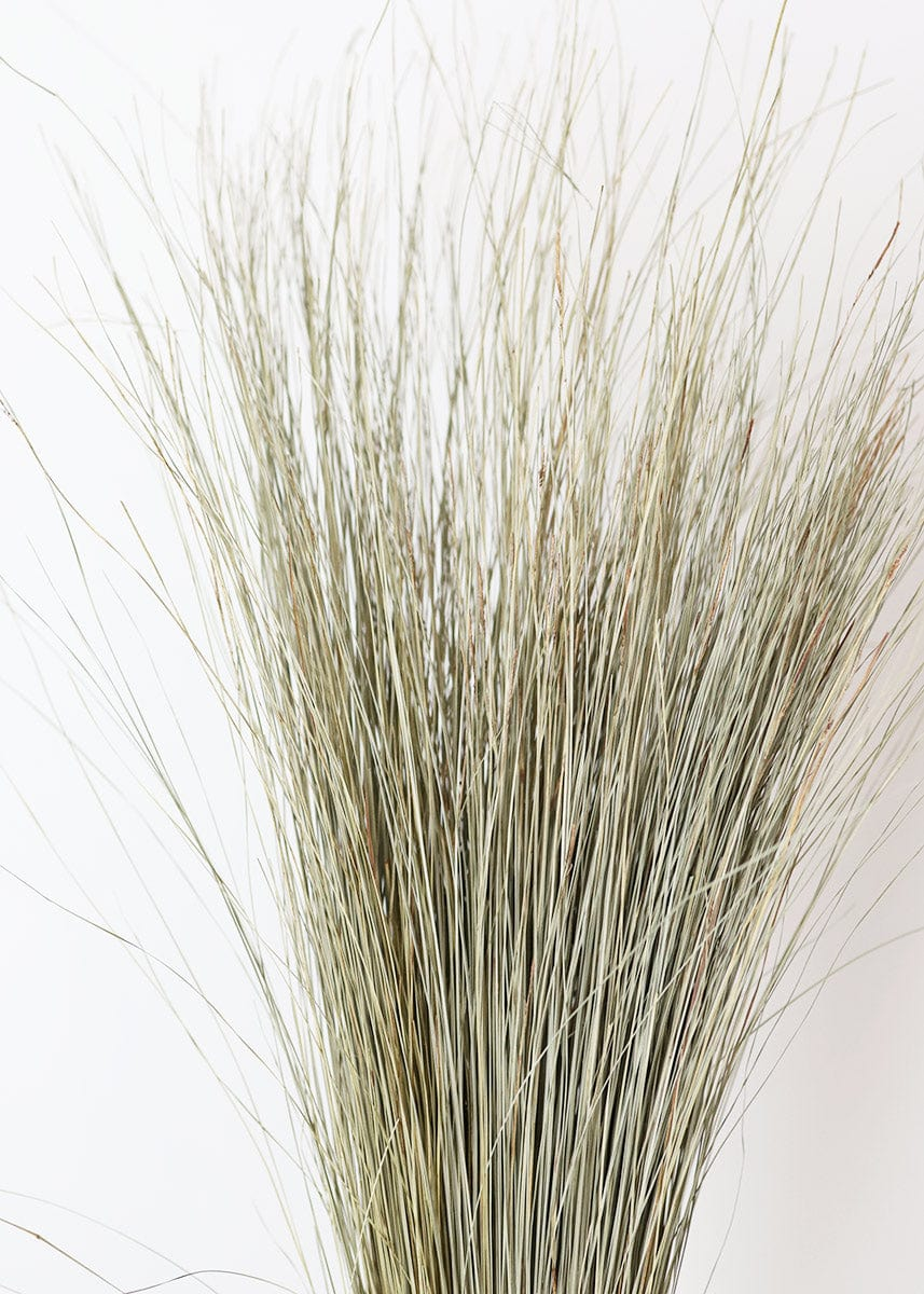 Dried Natural Green Dune Grass