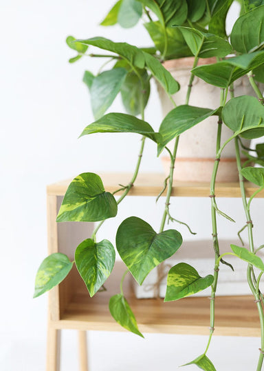 Pothos Real Touch Greenery Bush