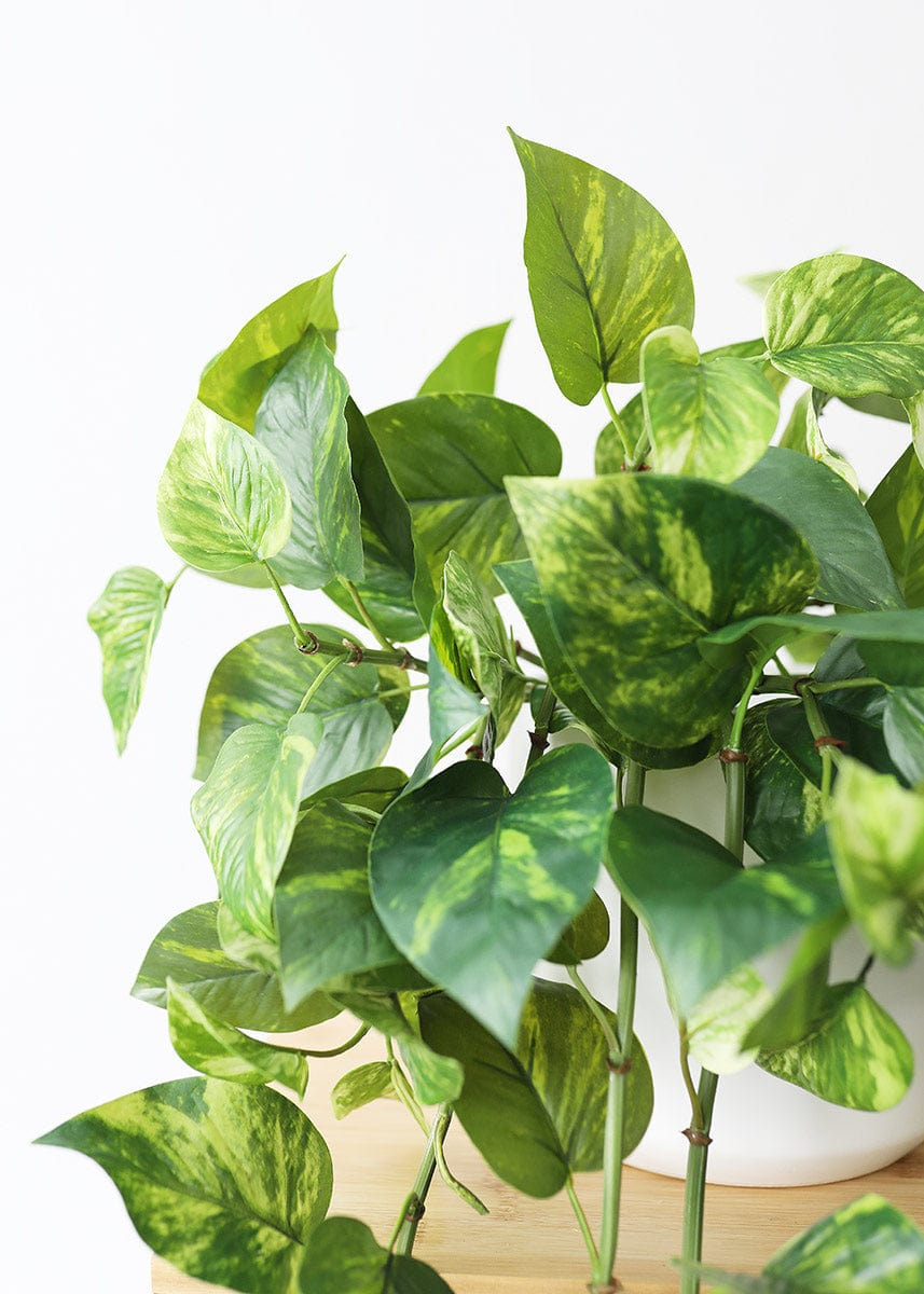 Real Touch Pothos House Plant