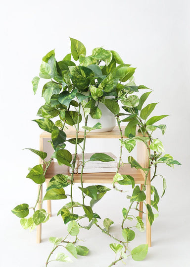 Hanging Real Touch Pothos Plant