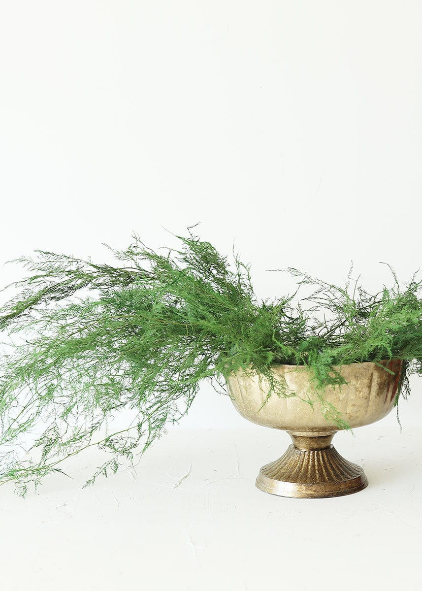 Gold Compote with Plumosus Fern