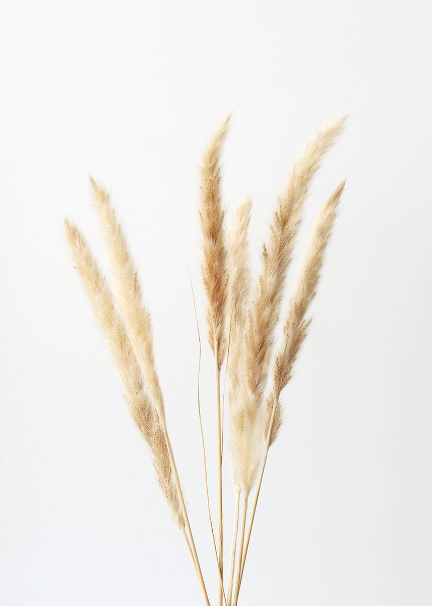 Pack of 6 - Smooth Natural Tan Pampas Grass - 25-29.5