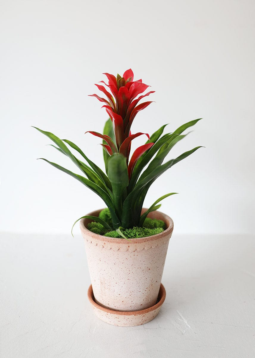 Fake Bromeliad Plant in Red