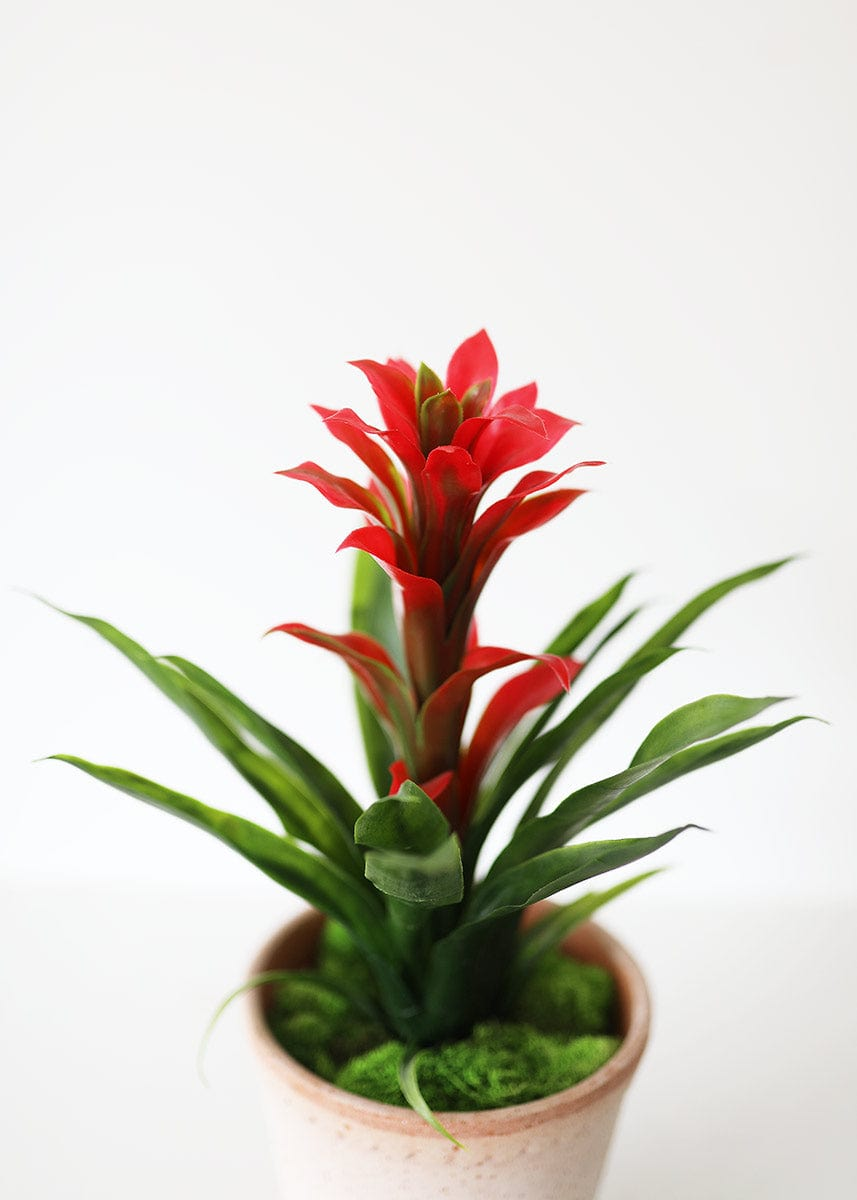 Red Artificial Bormeliad Plant