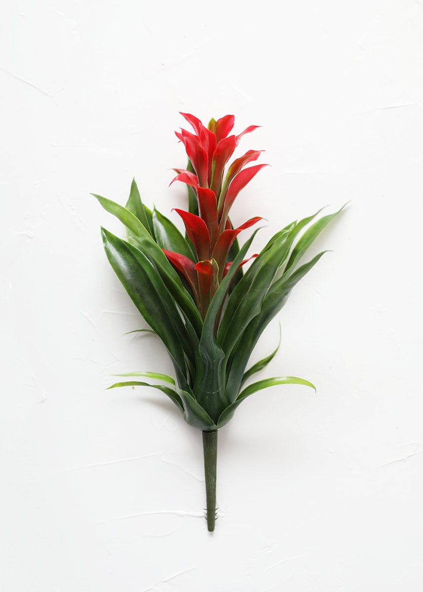 Red and Green Pineapple Plant