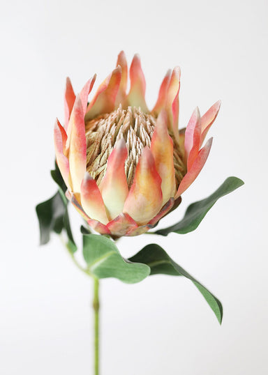 Orange Pink Artificial King Protea