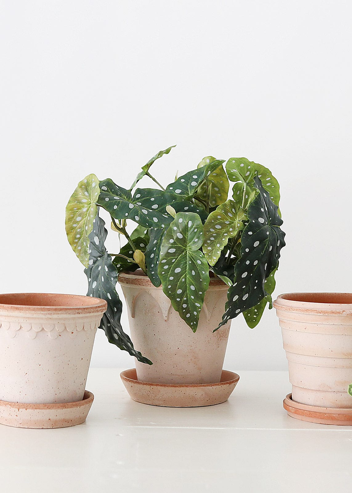 Fake Begonia Plant in Terra Cotta Planter