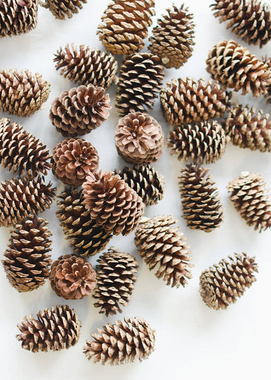 Brown Bulk Pine Cones