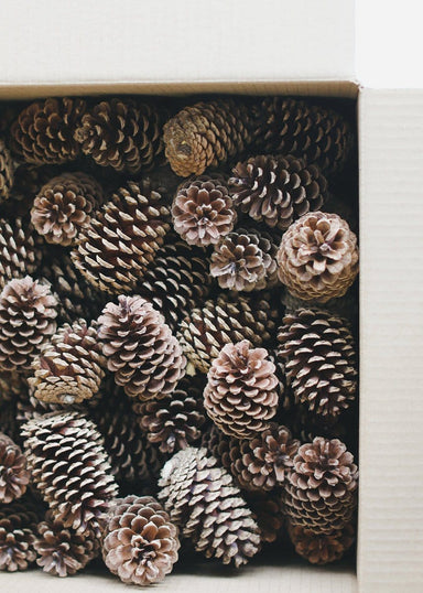 Box of Natural Pine Cones