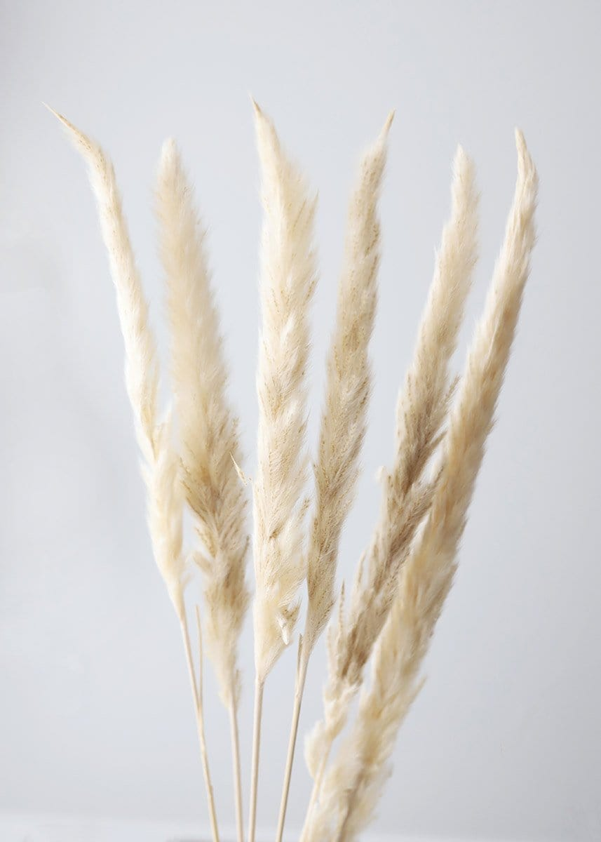 Natural Tan Preserved Pampas Grass