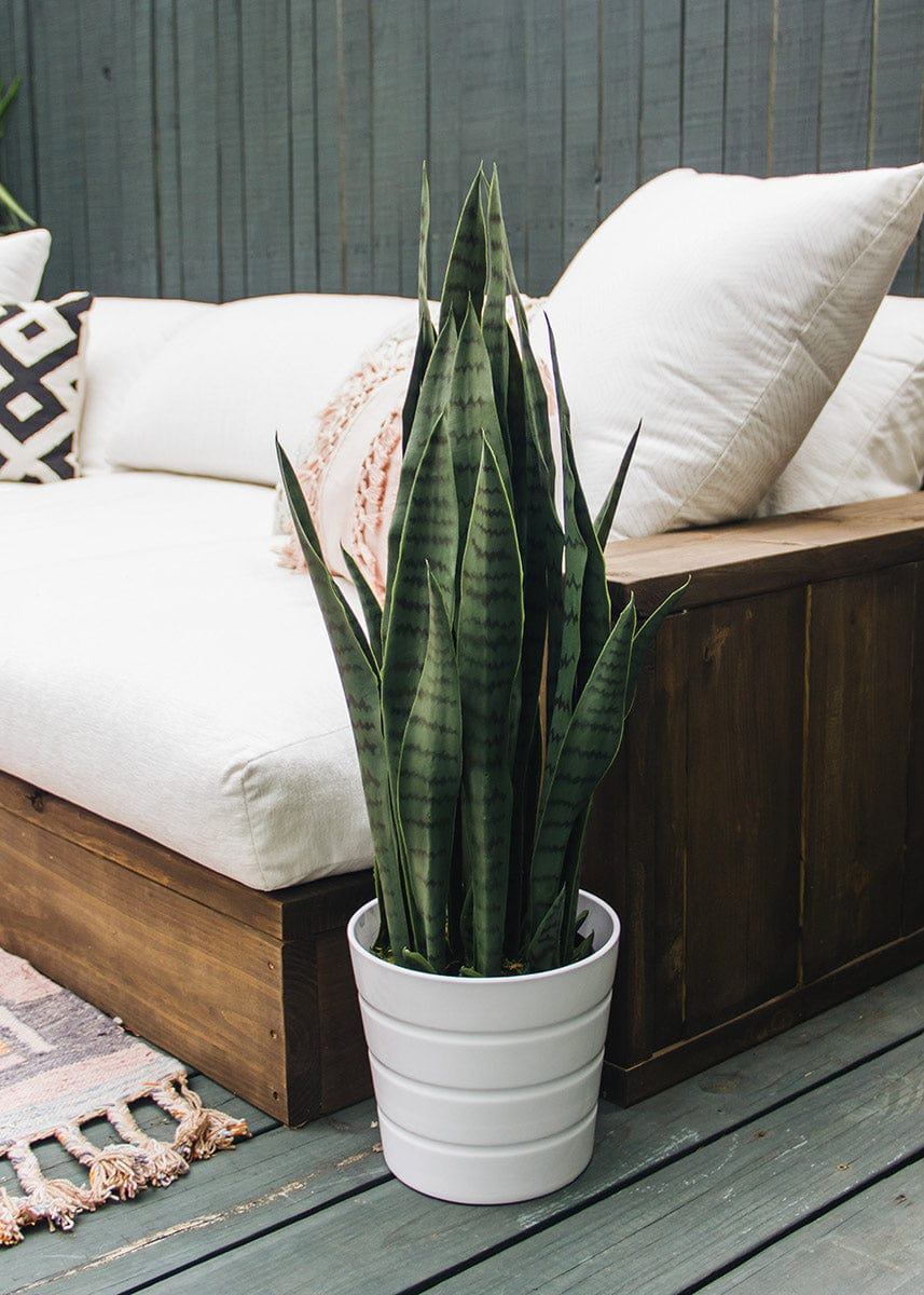 Faux Outdoor Snake Plant in Pot - 35