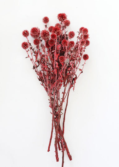 Red Burgundy Dried Thistle