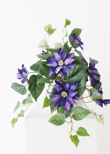 Purple Indoor Outdoor Clematis Flower Bush