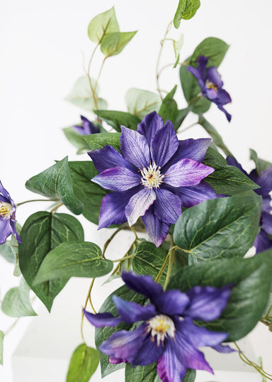 Purple Fake Clematis Flowers